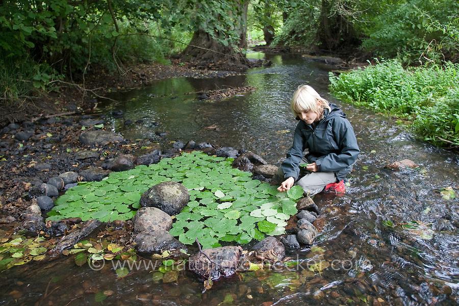 Naturkunst, Natur-Kunst, ein Kind, Junge legt ein Herz aus Steinen gefüllt mit grünem Laub, Blatt, Blätter in einem Bach, landart