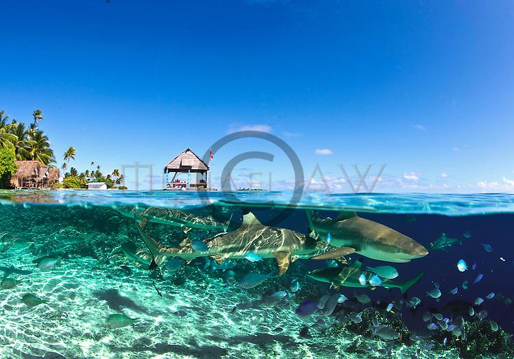French Polynesia; Fakarava South Passage,