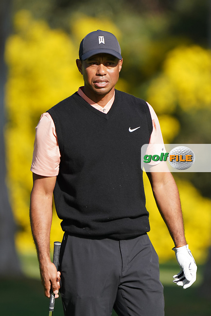 Tiger Woods (USA) in action during the first round of The Genesis Invitational, Riviera Country Club, Pacific Palisades, Los Angeles, USA. 12/02/2020<br /> Picture: Golffile | Phil Inglis<br /> <br /> <br /> All photo usage must carry mandatory copyright credit (© Golffile | Phil Inglis)