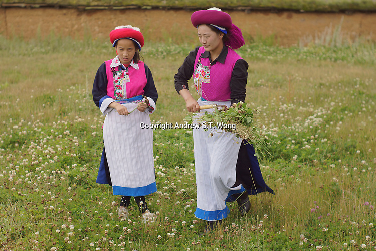 Diqing Tibetan Autonomous Prefecture, Yunnan Province, China - Tibetan women work in the fields, August 2018.