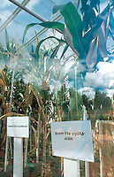 Kenya. Nairobi Province. Nairobi. Kenya Agricultural Research Institute (KARI). As part of a program to improve food security in Kenya, the Insect Resistant Maize for Africa (IRMA) project is testing BT Maize in a Bio Safety Level 2 Greenhouse complex at the National Agricultural Research Laboratory (NARL). The BT Maize is a genetically modified (GM) maize. © 2004 Didier Ruef