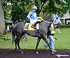 Stormin Wendy before The Tax Free Shopping Distaff on Owners Day at Delaware Park on 9/13/14