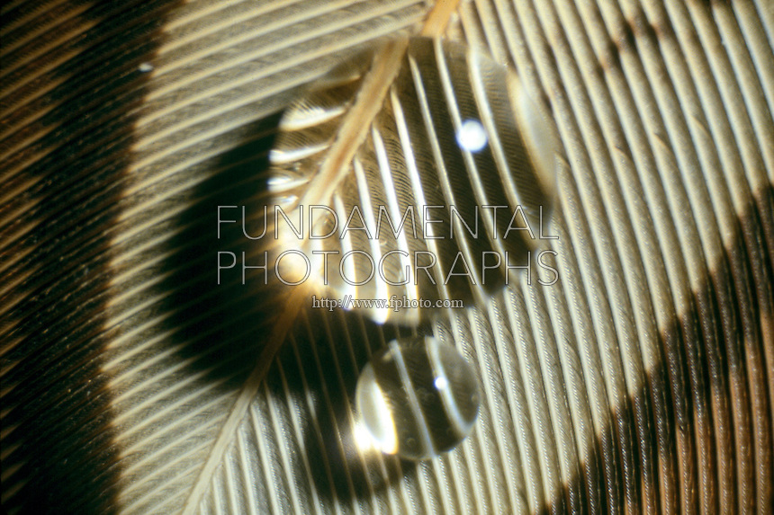 MAGNIFICATION BY WATER DROP ON FEATHER<br />