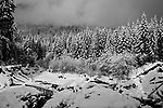 Kautz Creek, near Longmire in Mount Rainier National Park lies frozen in winter snow.  Black and White.  Gray Scale.