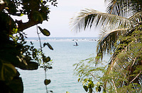 Fishing boats grouped together offshore are glimpsed through the trees on the island