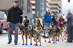 Mitch Seavey's dog sled team prepares to race at the ceremenial start of the 43rd Annual Iditarod in Anchorage, Alaska. The 1000 mile dog sled race usually restarts in Willow, Alaska, and finishes in Nome. Poor snowfall, however, forced the restart north to Fairbanks.