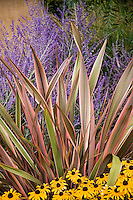 Phormium 'Sundowner' upright strap, linear foliage plant in California garden border