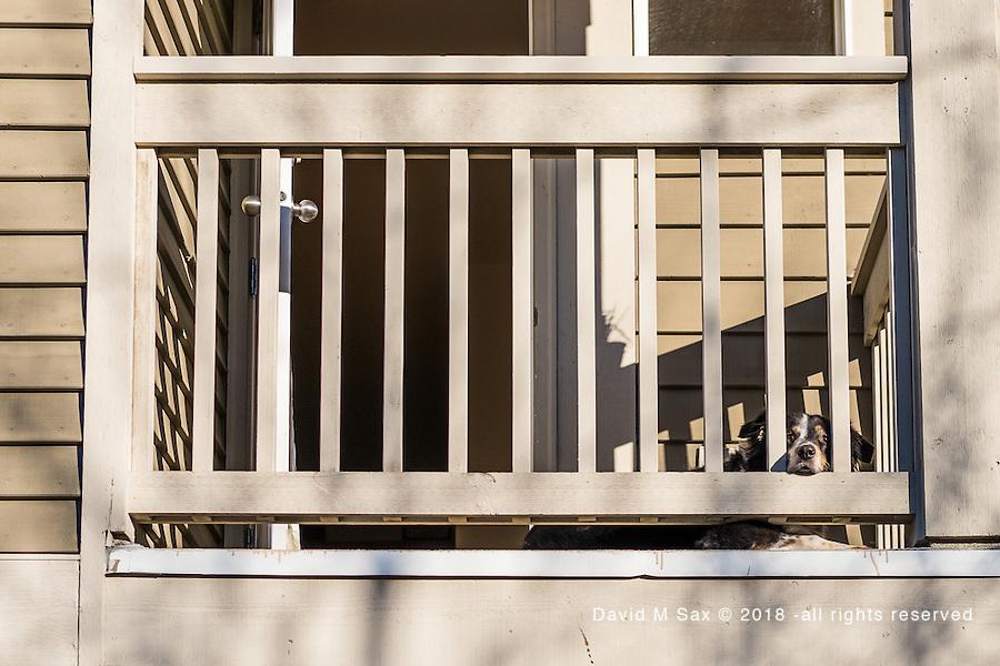 2.12.17 - Sunning on The  Deck...