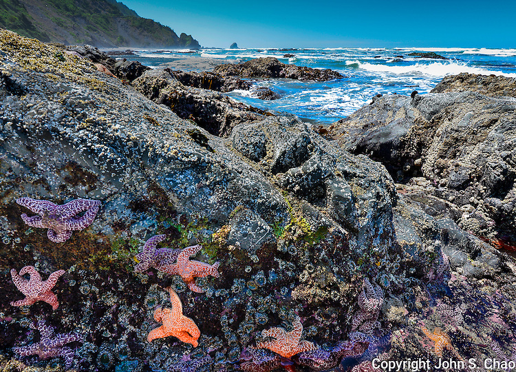 Colorful seastars cling to low-tide rocks at Enderts Beach, Redwood National Park, California