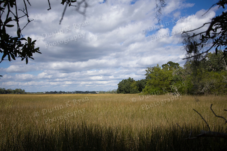 Marsh grass at Boon Hall Plantation Charleston South Carolina