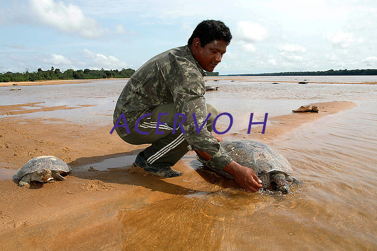 """Fiscal solta tartaruda apreendida durante aÁ""""o da  FudaÁ""""o de Meio Ambiente CiÍncia e Tecnologia de Roraima - FEMACT, IBAMA e Policia Militar centenas de tartarugas que seriam comercializadas na cidade de Manaus por cerca de R$500,00 s""""o apreendidas de traficantes de animais silvestres e soltas baixo rio Branco no municÌpio de CaracaraÌ a 600 km de Boa Vista, capital de Roraima. <br /> CacaraÌ, Roraima, Brasil.<br /> 29/11/2005<br /> Foto de Jorge MacÍdo/Interfoto"""