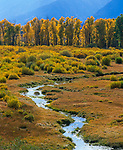 Grand Teton National Park, WY<br /> Stream flows through a grassy meadow at Blacktail Ponds with a line of cottonwoods backlit in the afternoon sun