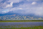 Idaho, South Central, Camas County, Fairfiled. A telephoto view over the camas fields to the Soldier Mountains engulfed in spring weather.