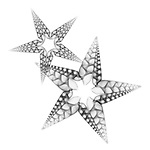 X-ray image of starfish (black on white) by Jim Wehtje, specialist in x-ray art and design images.