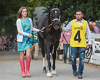 Celtic Chaos (no. 12) wins the John Morrissey Stakes on July 27 at Saratoga Race Course, Saratoga Springs, NY.  The winner was ridden by Eric Cancel and trained by Kiaran McLaughlin and bested eight rivals in the six and one half furlong race. (Robert Simmons/Eclipse Sportswire)