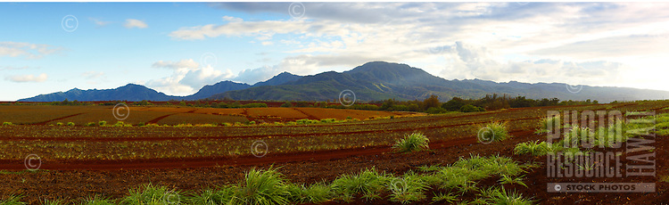 View of the pinapple fields in front of the Waianae mountain range.