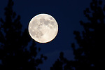 The blue moon rises near Gardnerville, Nev. on Friday, Aug. 31, 2012. .Photo by Cathleen Allison