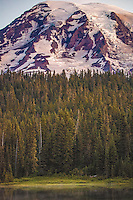 Mt. Rainier with Evergreens