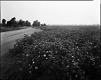 Arkansas and Mississippi Delta