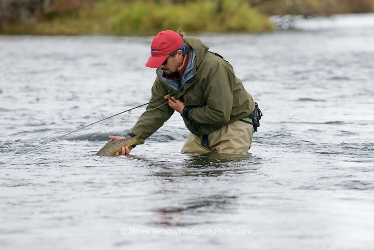 Fly fisherman releasing a brown trout on the lower Henry's Fork of the Snake River, Idaho.