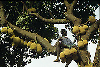 Joung farmer piking Jackfruits