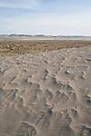 Hanford Reach National Monument, Wahluke Slope, sand dunes, grasslands, sagebrush, Columbia Basin, eastern Washington, Washington State, Pacific Northwest, USA, North America,