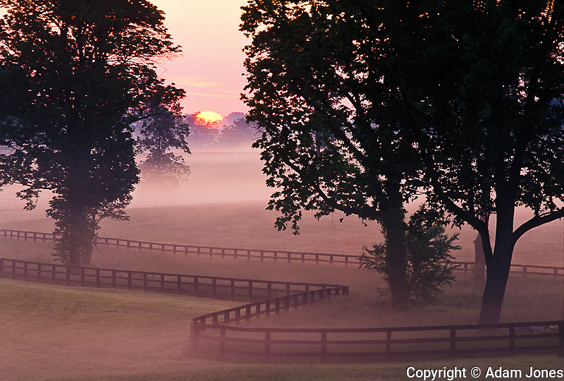 Sunrise on horse farm, Versailles, Kentucky