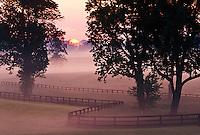 Sunrise on horse farm, Versailles, Kentucky