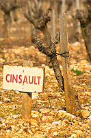 Cinsault vine and sign at La Truffe de Ventoux truffle farm, Vaucluse, Rhone, Provence, France