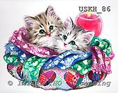 Kayomi, CUTE ANIMALS, paintings, KeepWarm_M, USKH86,#AC# illustrations, pinturas ,everyday