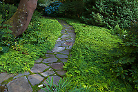 Adiantum venustum (Evergreen Maidenhair) lawn in Elisabeth Miller Botanical Garden