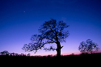 A black oak in the foothills against a sunset of magical colors