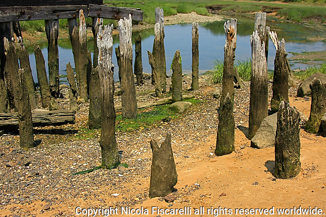 Weathered wooden pillar supports of a disappeared bridge over the creek, in Wellfleet wetlands Cape Cod.