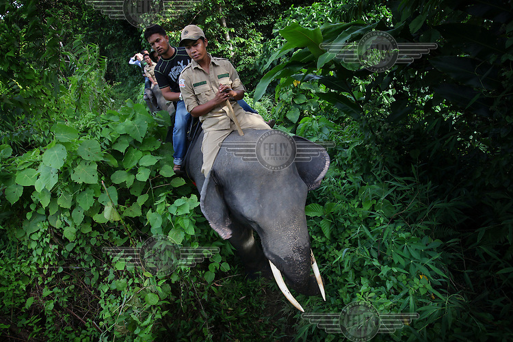 Government rangers use elephants to help patrol the Leuser and Ulu Masen forests on the island of Sumatra. The 3.3 million hectare area in the northern part of Aceh province, is the largest contiguous forested area in South East Asia and is a rich provider of environmental and economic benefits for the two million people living in Aceh.