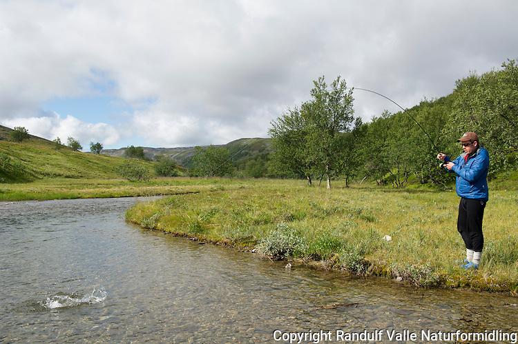 Mann kjører smålaks i liten elv. ---- Man fighting small salmon in small river.