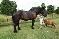 Connie Boger's granddaughter, Leah Boger, 9, shows horses large and small July 21 2020 at Boger's farm on Hickory Creek Road.<br />(NWA Democrat-Gazette/Flip Putthoff)
