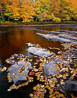 Porcupine Mountains Wilderness State Park, MI<br /> Exposed shale on the Presque Isle River as it flows through the autumn forest