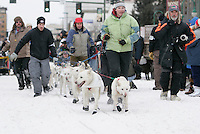 Dog Handlers walk veteran musher Jim Lanier's dogs to the start line in Anchorage on Saturday March 1st during the ceremonial start day of the 2008 Iidtarod Sled Dog Race.