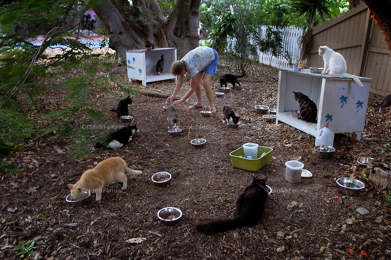 Stray cats come to volunteer Doris Fortune as she puts out food for some of the more tame cats. Soft-hearted volunteers spend time caring for homeless kitties. The cats are trapped, spayed or neutered, give vaccinations and aids and leukemia tests, their left ear is clipped to show they've been caught, and they are released (or adopted if possible) and fed by volunteers. <br /> One veterinarian estimates there are 10,000 feral cats in the Keys.
