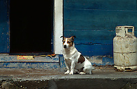 Portugal, Fischerhäuser in Costa Nova bei Aveiro, Hund