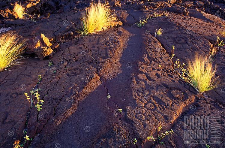 Petroglyphs on the Alaloa Trail, a part of the Naalahele Hawaii Statewide Trail & Access System, south Kohala