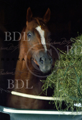 General Assembly, stunning Travers' winning son of Secretariat, at Saratoga 1979