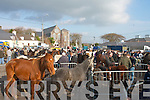 FAIR: The scene at the horse fair in Killorglin on Saturday.   Copyright Kerry's Eye 2008