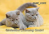 Marek, ANIMALS, REALISTISCHE TIERE, ANIMALES REALISTICOS, cats, photos+++++,PLMP6385,#a#, EVERYDAY