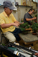 Isamu Ogura, a student at a bonsai class in the Tojuen bonsai nursery. Bonsai-mura, Omiya, Saitama Prefecture, Japan, June 25, 2013. The Omiya Bonsai Village was founded in 1925 and is Japan's most famous production center for bonsai.