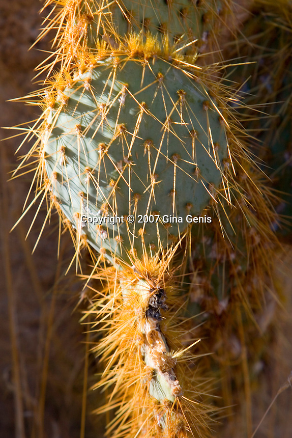 Cacuts in Joshua Tree National Park