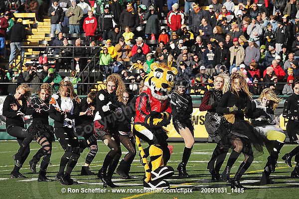 October 31, 2009; Hamilton, ON, CAN; Hamilton Tiger-Cats mascot Stripes and the cheerleaders reenact Michael Jackson's Thriller during halftime. CFL football: Saskatchewan Roughriders vs. Hamilton Tiger-Cats at Ivor Wynne Stadium. The Tiger-Cats defeated the Roughriders 24-6. Mandatory Credit: Ron Scheffler. Copyright (c) 2009 Ron Scheffler.
