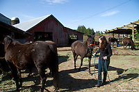 Hannah Mueller, DVM, co-founder and vice president of the Northwest Equine Stewardship Center and practice owner of Cedarbrook Veterinary Care, cars for horses on April 1, 2014. The horses belong to Summer Raffo, who died in the Oso mudslide on March 22, 2014.  Alexis Blakey, a friend of Raffo's has been taking care of the horses while Raffo's family decides what to do with them.