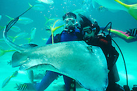 MARINE LIFE: DIVERS<br /> Naturalist Divers With Southern Stingray<br /> Dasyatis americana