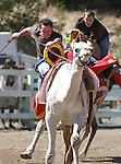 Vince Alonzo and Matt Roders, rear, compete in the media challenge of the 51st Annual Virginia City International Camel Races in Virginia City, Nev. on Sept. 10, 2010..Photo by Cathleen Allison